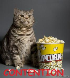 contention cat meme