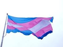 transflagwaving