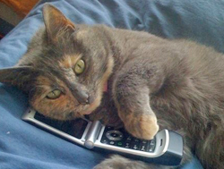 "[Image: A cat, dialing numbers on a flip-phone. The only acceptable kind of ""catcalling"" that exists.]"